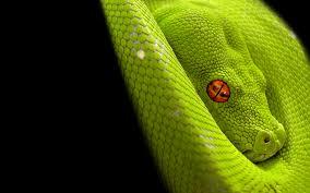 asher bayish bond limelyfe snake